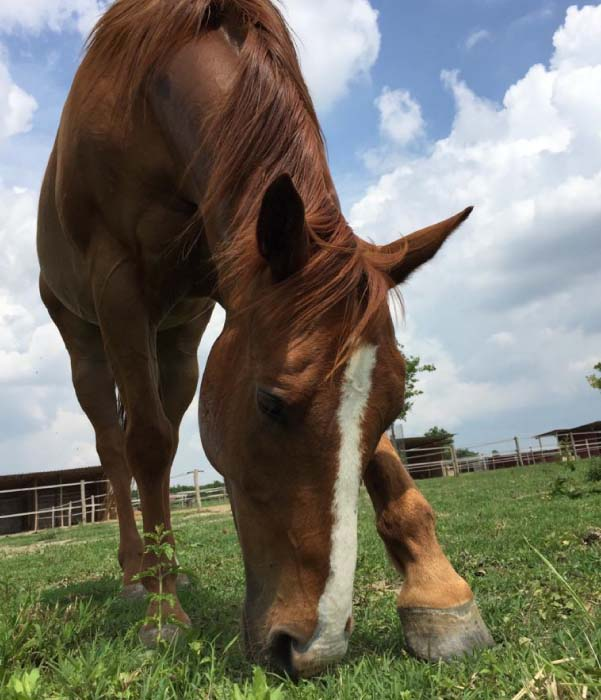 cavallo ippoeducazione